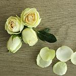 Irishka Cream Rose Bunch
