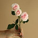 Irishka Pink Rose Stem