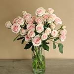 Irishka Pink Wholesale Roses In a vase