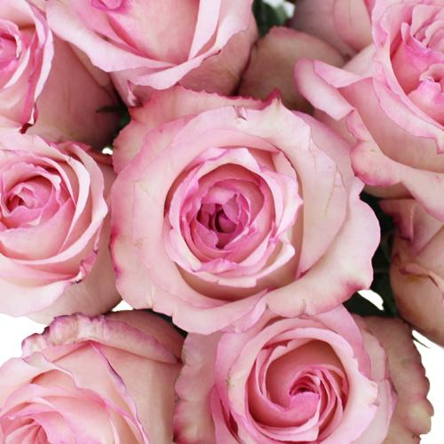 Big Day Delicious Rose