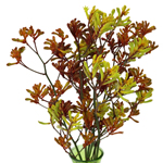 Bulk Kangaroo Paw Flower Assorted Color
