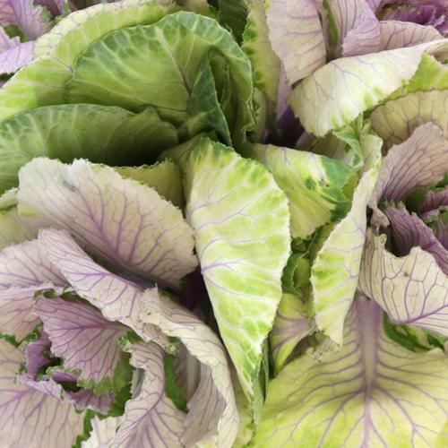 Lilac Wedding Kale Flower