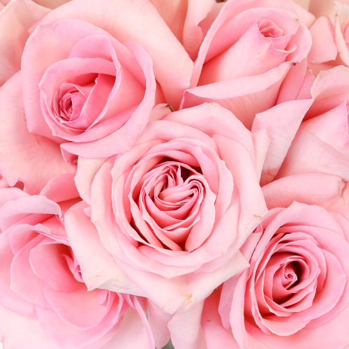 Charming Pink Sweetheart Roses