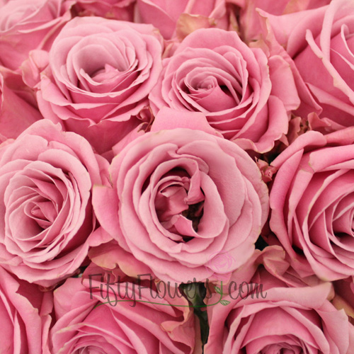 Pink Keano Rose