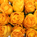 Fresh Cut Roses Yellow Kerio