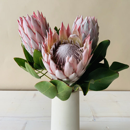 Tropical Flowers Pink Protea