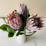 King Protea Tropical Flowers