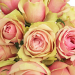 Bulk Rose Bicolor Novelty La Belle