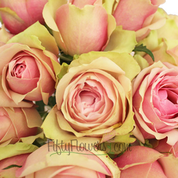 La Belle Antique Pink Rose