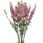 Light Pink Larkspur Fresh Cut Flower