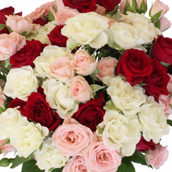 Latin Lovers Petite Rose Mix