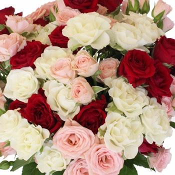 Valentine\'s Latin Lovers Petite Rose Mix