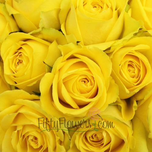 Latina Yellow Rose