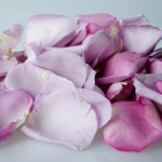 Buy Bulk Purple Rose Petals