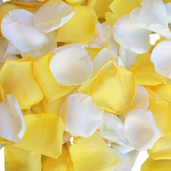 Lemon Creamsicle Fresh Rose Petals