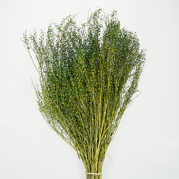 Green Dragon Dried Lepidium
