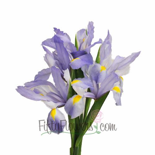Iris Light Blue Flower