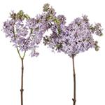Buy fresh lilac Flower for weddings