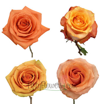 Light to Medium Orange Roses