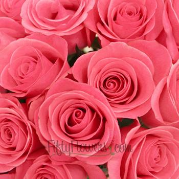 Orlando Pink Rose