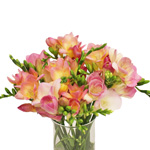 Bulk Pink Freesia Flower