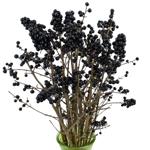 Wholesale greenery black pearl ligustrum berries filler flowers sold as bulk