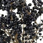 Wedding greenery black pearl ligustrum berries filler flowers sold near me