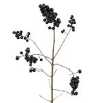 Single stem of black pearl ligustrum berries for sale near me