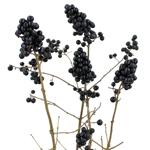 Bulk greenery black pearl ligustrum berries filler flowers sold near me for delivery