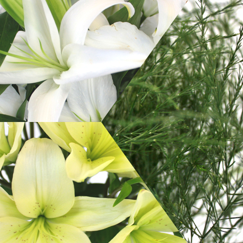 Lovely Lily Ivory Combo Pack