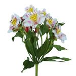 Bulk Alstromeria Valencia flower