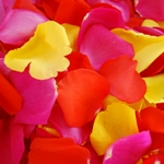 White Rose Petals Wholesale