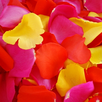 Bright Sorbet Fresh Rose Petals