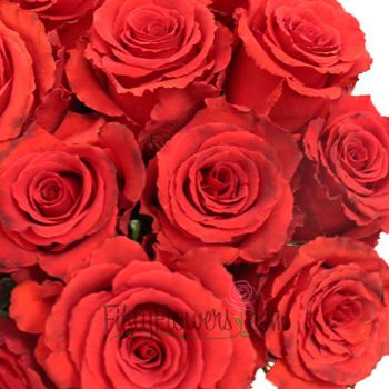 Red Lotus Rose