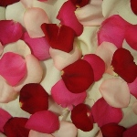 Rose Petals Wholesale for sale