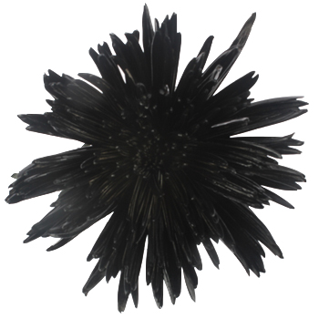 Gothic Black Airbrushed Spider Mum