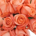 Salmon Pink Rose Marlysse