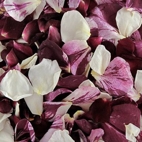 Maroon Swirl Dried Rose Petals