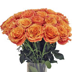 Bulk Rose Dark Orange Dark Milva