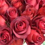 Novelty Rose Big Fun