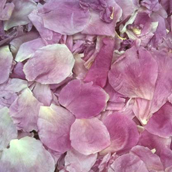Blush Dried Peony Flower Petal