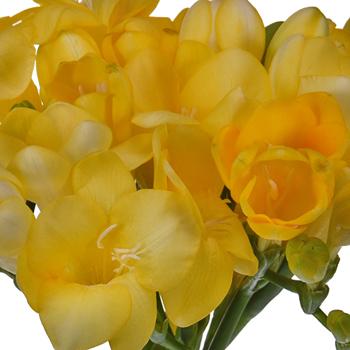 Yellow Freesia Flower