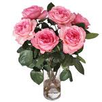 Garden Rose Classic Woman Cream Flower