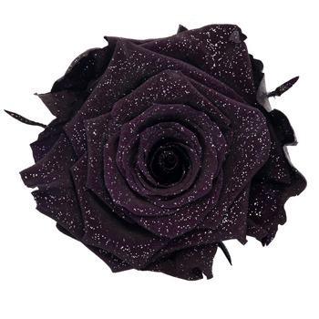 Preserved Metalized Deep Purple Rose