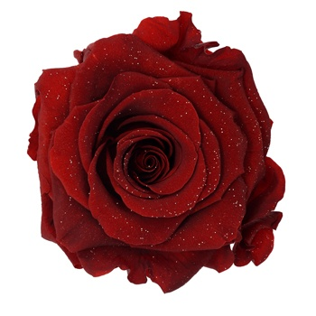 Preserved Metalized Deep Red Rose
