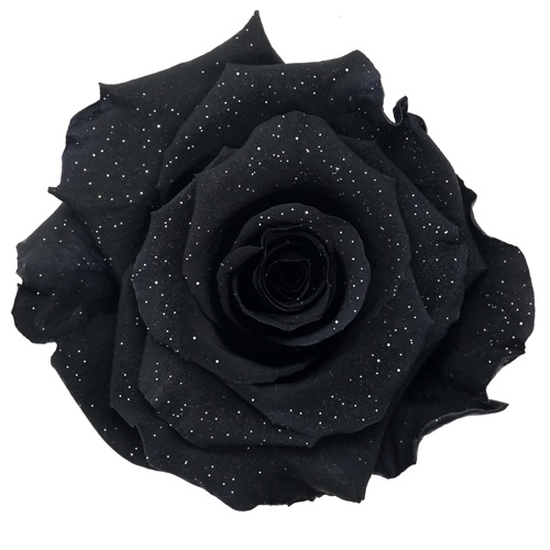 Preserved Metalized Night Black Rose