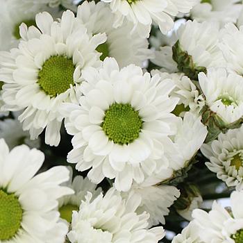 White Micro Pom Flower