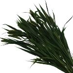 Fresh Greens Millet