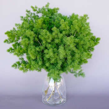 ideas for flower vase fillers with natural green flower.htm ming fern green filler fiftyflowers com  ming fern green filler fiftyflowers com