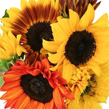Farm Mix Bulk Mini Sunflowers for Mom